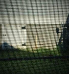 image behind screened window